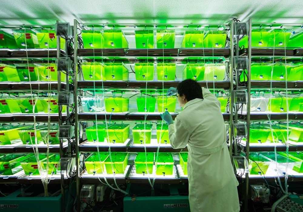 Biotecnologie per la bioenergia