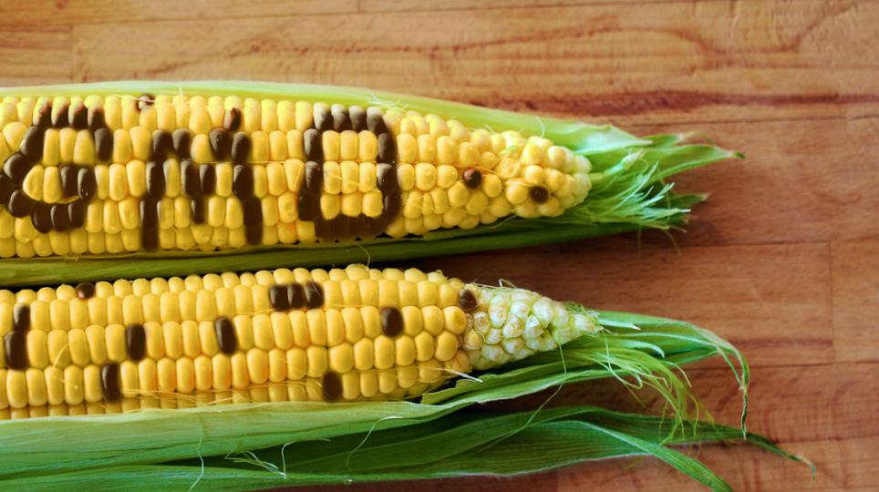 diritto agroalimentare e OGM